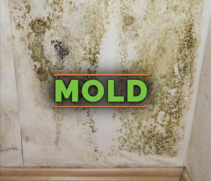 Mold growth on wall. The word MOLD in the middle of the picture