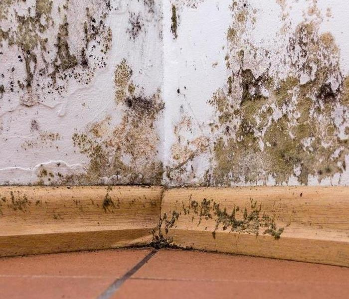 Mold Remediation Emergency Tips for Handling Mold Damage