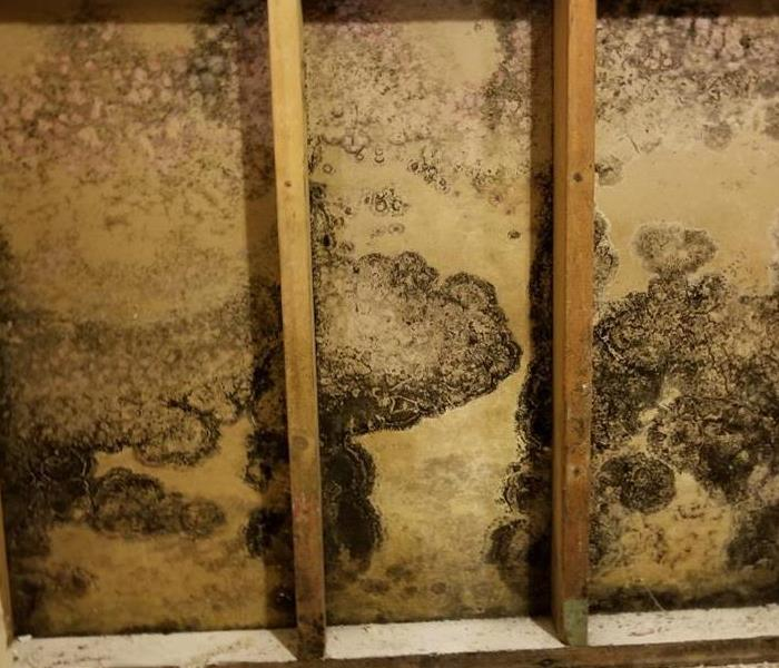 Commercial Are Mold Inspections Worth the Investment?