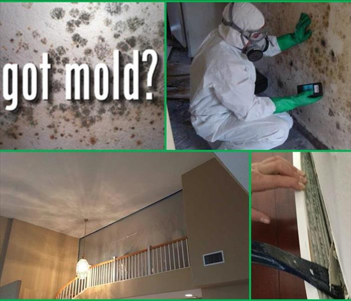 Mold Remediation Be careful! Without proper training, you could be spreading mold throughout your Costa Mesa Home.